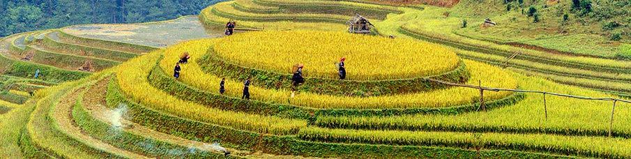 severni-vietnam-terasy