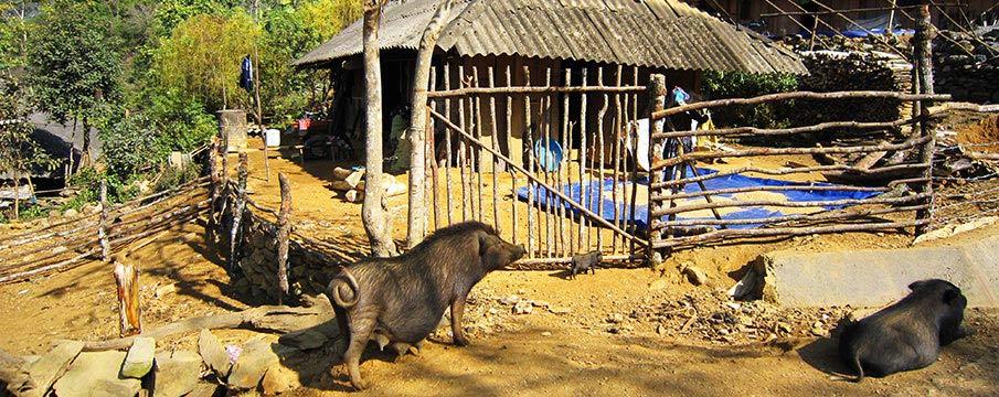 vietnam-vesnice