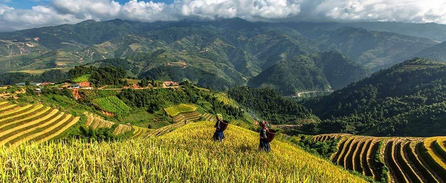 vietnam-yen-bai-terasy