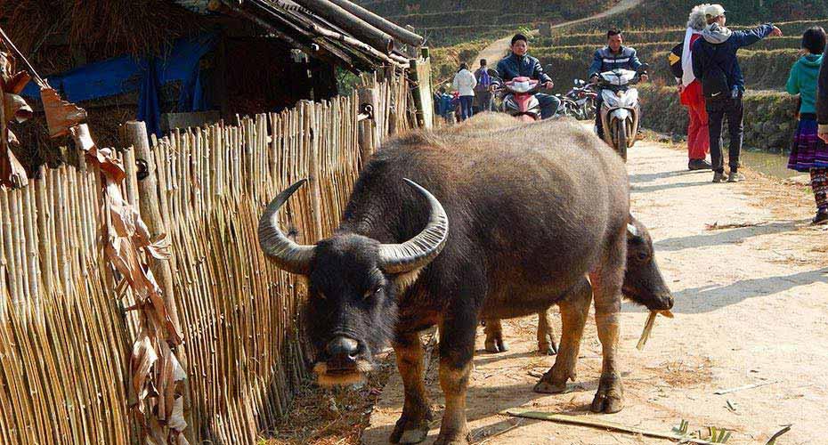 tavan-severni-vietnam13