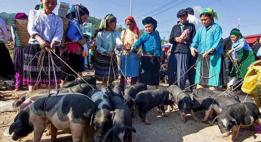 vietnam-market-dong-van