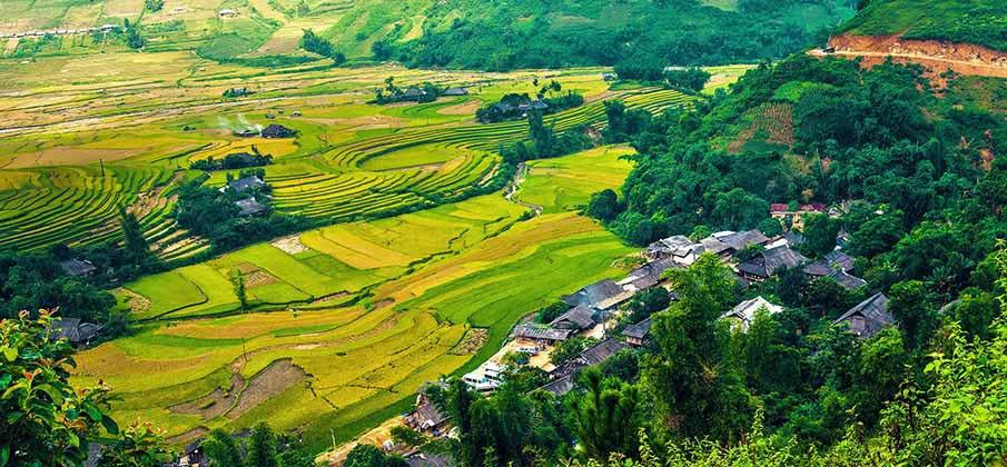 yen-bai-ryzove-pole-vietnam