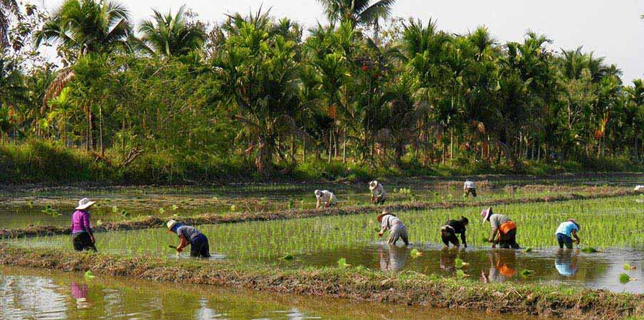 chiang-mai-thajsko-pole