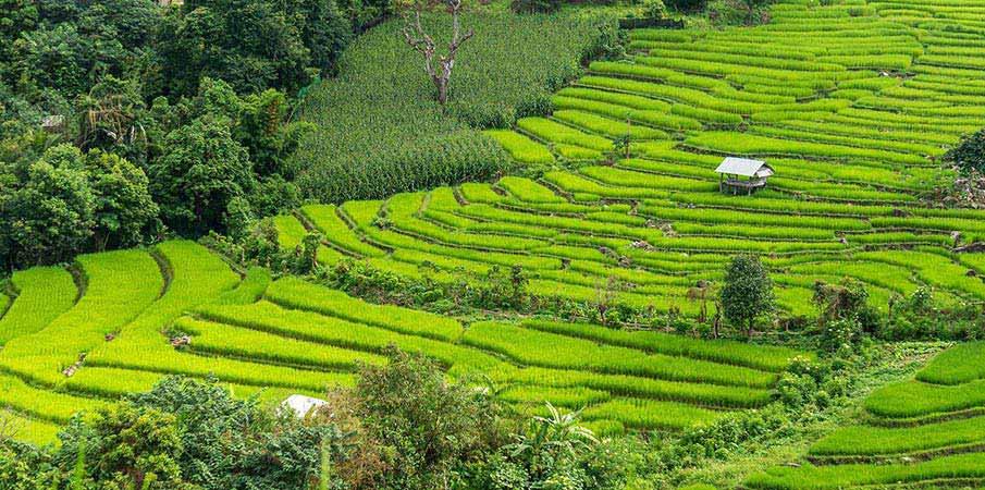 chiang-mai-thajsko-ryzove-terasy