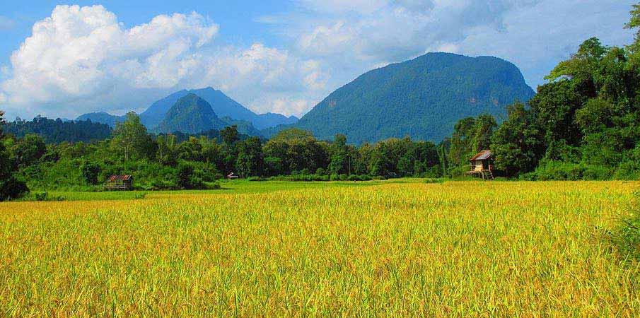 laos-krajina-pole