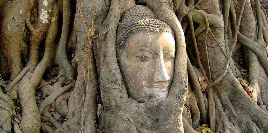 thajsko-hlava-strom-ayutthaya