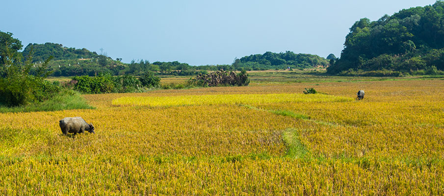 ostrov-co-to-pole-vietnam