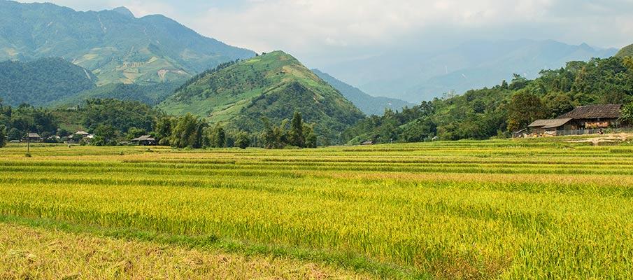 tu-le-valley-rice-field-vietnam4