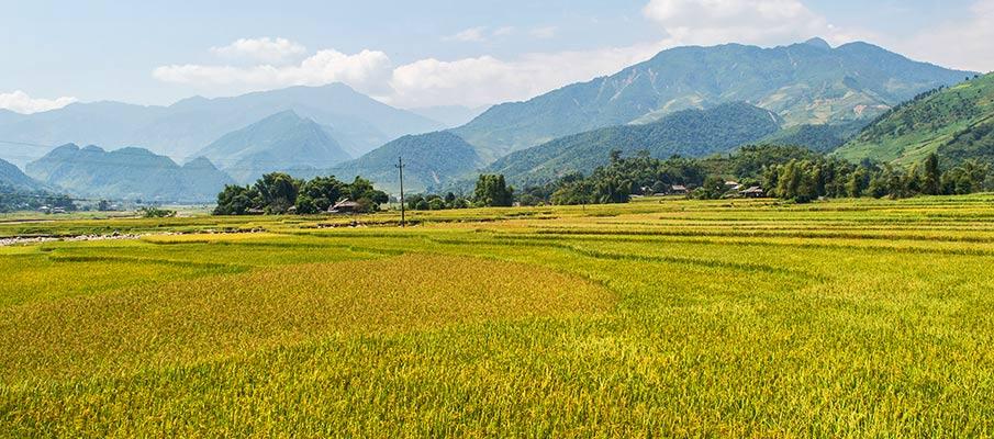 tu-le-yen-bai-rice-field-vietnam2