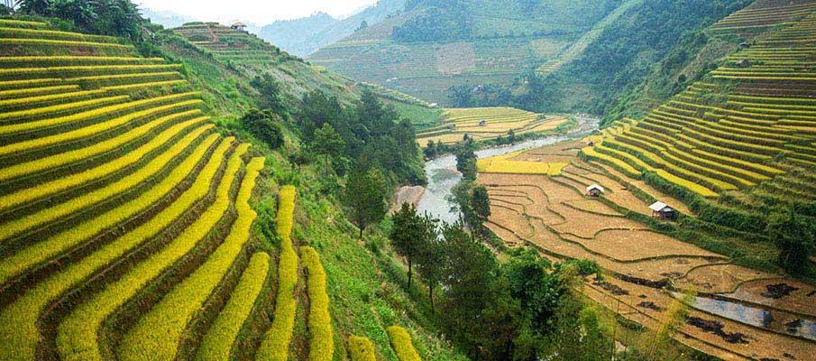 mu-cang-chai-terasy-vietnam