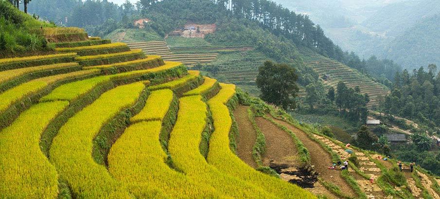 mu-cang-chai-terasy-vietnam2