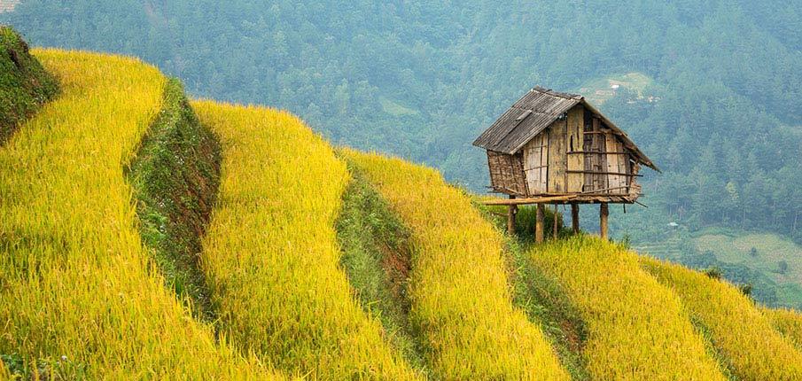 mu-cang-chai-terasy-vietnam3