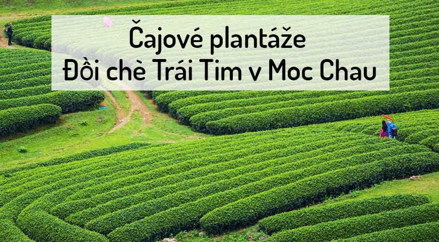 cajove-plantaze-moc-chau-vietnam